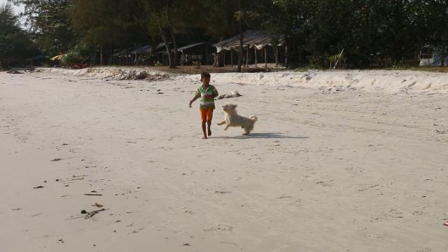 sihanoukville, cambodge, otres, chiens, cambodgien