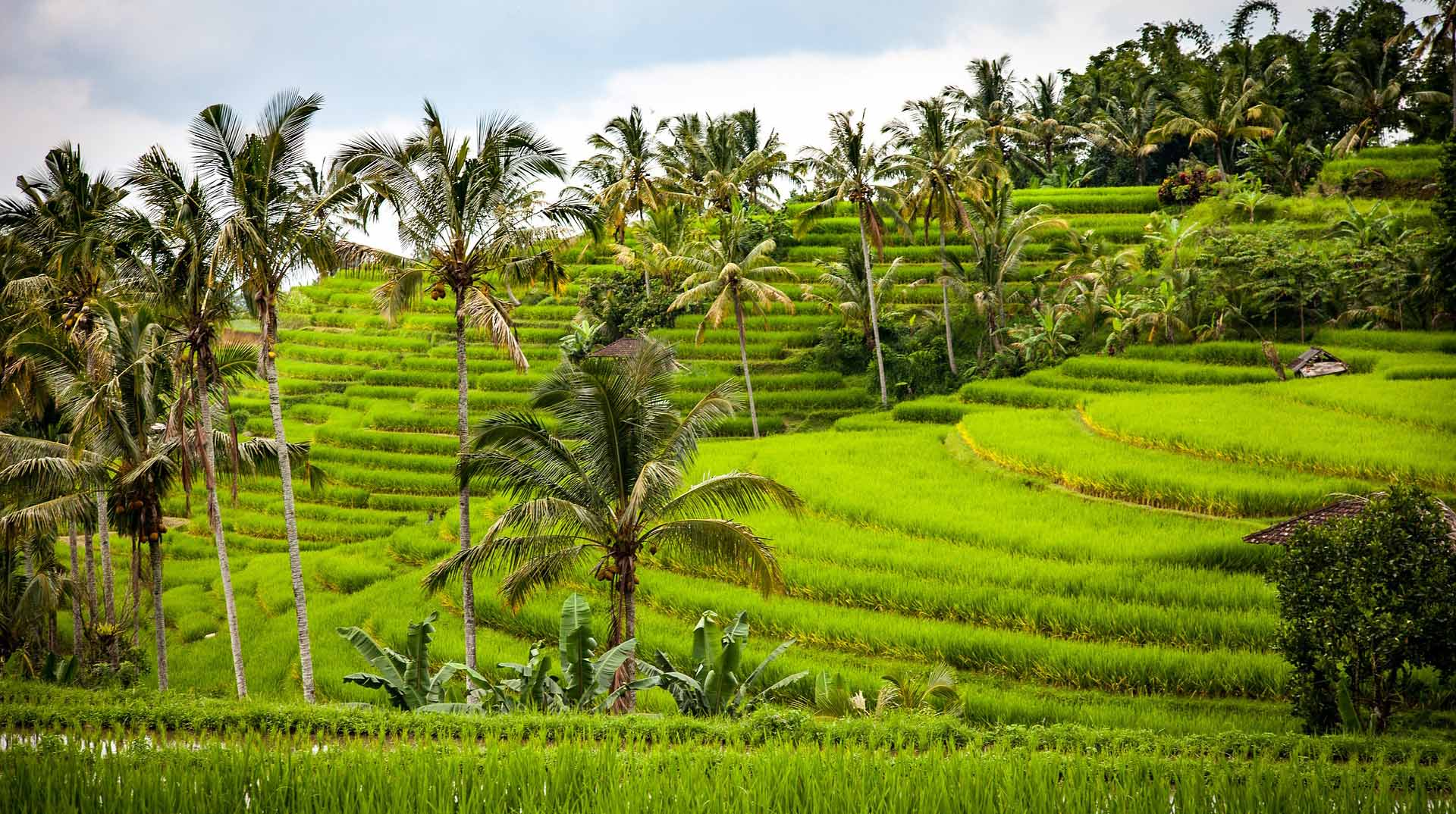 Bali - Lytchee